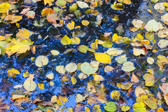 Autumn leaves after the rain Stock Photos