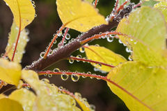 Autumn leaves with raindrops Stock Photo
