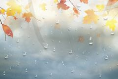 Autumn leaves for the rainy glass. Nature autumn background with Realistiac raindrops on the window, branch of maple leaves. Autum Royalty Free Stock Image