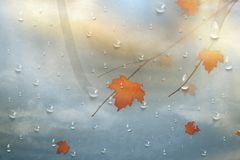 Autumn leaves for the rainy glass. Nature autumn background with Realistiac raindrops on the window, branch of maple leaves. Autum Stock Photos