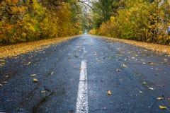 Autumn leaves on rainy road Stock Photography