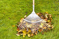 Autumn leaves and rake cleaning on green lawn Royalty Free Stock Images