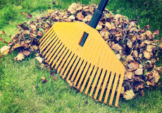 Autumn leaves with rake Royalty Free Stock Image