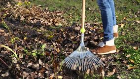Autumn leaves are raked stock video