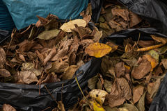 Autumn leaves. Raked and gathered fall leaves in harman, romania royalty free stock photography