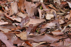 Autumn Leaves Ready to Fall Stock Image