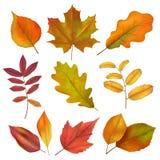 Autumn Leaves Realistisch geel en rood dalingsblad Isoleert vectorreeks stock illustratie