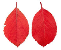 Autumn leaves red apple Royalty Free Stock Photography