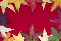 Autumn leaves on red background Royalty Free Stock Image