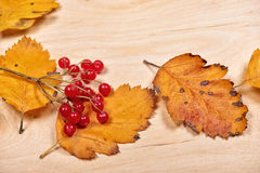 Autumn leaves and red berry on wooden background Stock Photos