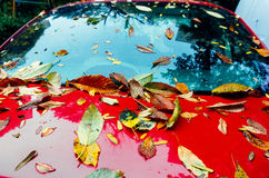 Autumn leaves on red car Stock Photos