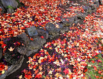 Autumn Leaves of Red and Gold. Fallen leaves at Stack Park - Redmond, OR royalty free stock photo