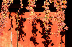 Autumn leaves and red wooden door backgrounds Stock Photo