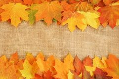 Autumn leaves red, yellow, orange background Stock Photo