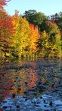 Autumn Leaves reflect on pond Stock Photography
