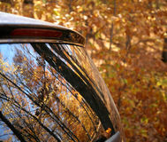 Autumn leaves reflected in a car window Royalty Free Stock Photo