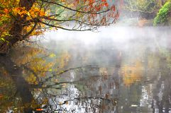 Autumn leaves are reflected in the river royalty free stock photos