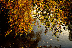 Autumn leaves reflecting in calm water Stock Photography