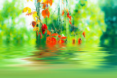 Autumn leaves reflecting Royalty Free Stock Image