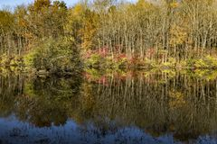 Autumn leaves reflecting off a lake. Autumn colors reflecting off a pond in a rural area on a autumn day Stock Photography