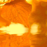 Autumn leaves, reflecting in water Stock Images