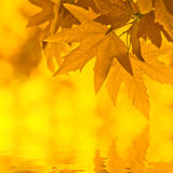 Autumn leaves, reflecting in water Royalty Free Stock Images