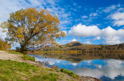 Autumn leaves at reflection Lake Hayes, South Island, New Zealand Royalty Free Stock Photography