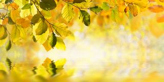 Autumn leaves reflection in water Royalty Free Stock Image