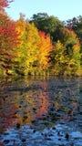 Autumn Leaves reflekterar på dammet Arkivbild