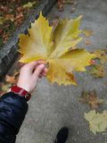 Autumn leaves. Rest, red- yellow Stock Images