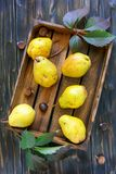 Yellow pears and chestnuts in an old box. Stock Images