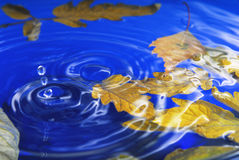 Autumn leaves in ripple water. Closeup of the autumn leaves in ripple water stock photos