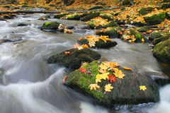 Autumn leaves and river stock image