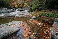 Autumn leaves in river Royalty Free Stock Photography