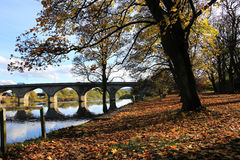 Autumn leaves on the river bank. Royalty Free Stock Photo