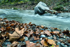 Autumn leaves beside the river. Close-up of beautiful autumnal leaves on the side of a small stream royalty free stock photos