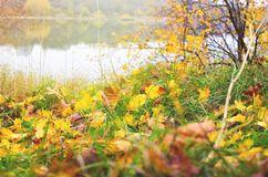 Autumn leaves and river. Fall days. Foliage. River bank stock photo