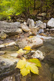 Autumn leaves on the river Royalty Free Stock Photos