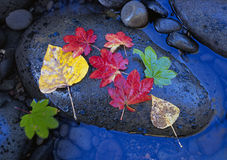 Autumn leaves on a river rock Royalty Free Stock Image