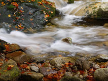 Autumn leaves and river Royalty Free Stock Photography