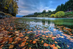 Autumn leaves by the river at sunset Stock Photography