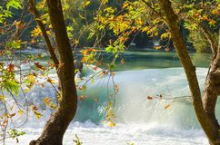 Autumn leaves on the river Royalty Free Stock Image
