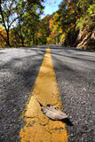 Autumn leaves on the road. Flying autumn leaves in the wind on a sunny road. a fallen leaf on the road.Still Life stock photos
