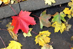 Autumn leaves. On the road boke stock image