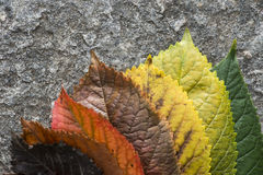 Autumn leaves. On a road. Multicolor Royalty Free Stock Photos