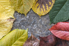 Autumn leaves. On a road. Multicolor Stock Photography
