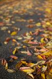 Autumn leaves in road on tarmac Stock Photo