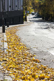 Autumn leaves on road Royalty Free Stock Image