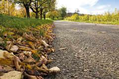 Autumn leaves by the roadside Stock Image
