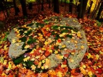 Autumn Leaves on Rock stock photo
